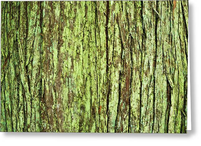 Moss On Tree Bark Greeting Card