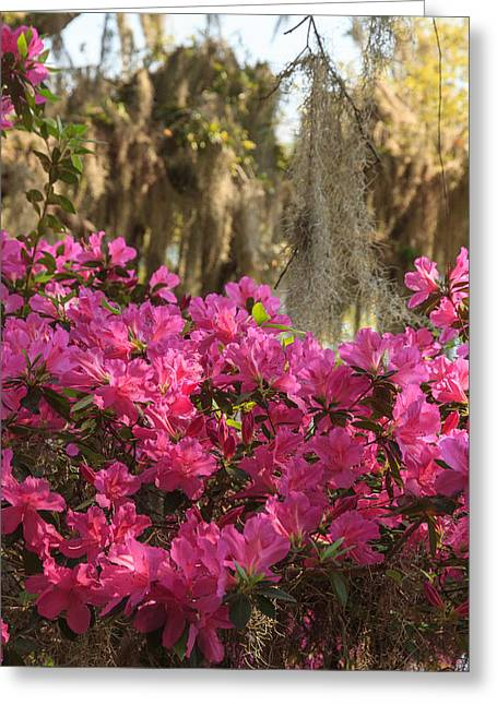 Moss Over Azaleas Greeting Card