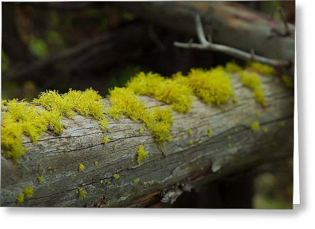 Moss Greeting Card by Sebastian Musial