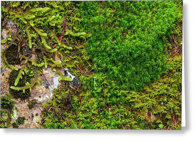 Mosses And Lichens Thrive On Boulder Greeting Card by Chuck Haney