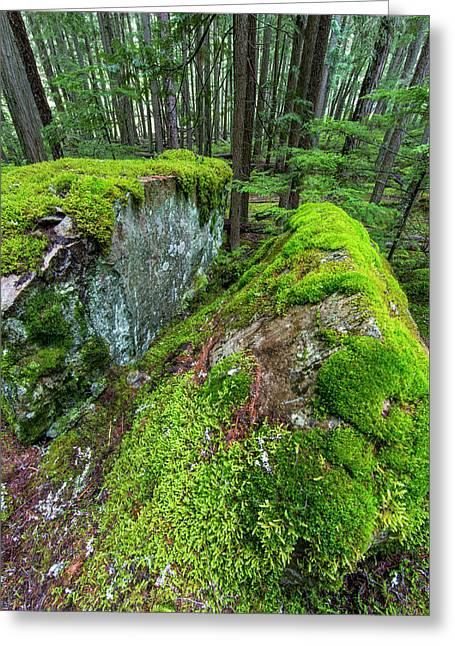 Mossy Boulders In Cedar And Hemlock Greeting Card by Chuck Haney