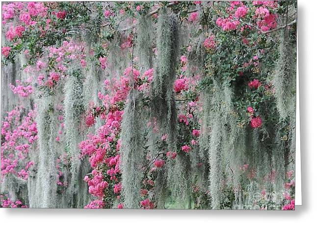Mossy Crepe Myrtle Greeting Card