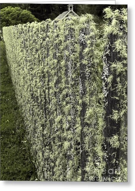 Mossy Fence Greeting Card by Jean OKeeffe Macro Abundance Art