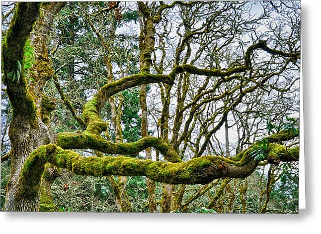 Greeting Card featuring the photograph Mossy Green by Kevin Munro