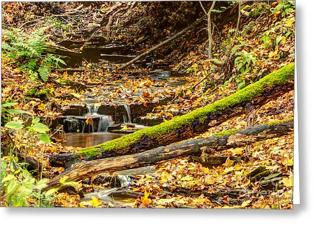 Mossy Log And Stream Greeting Card