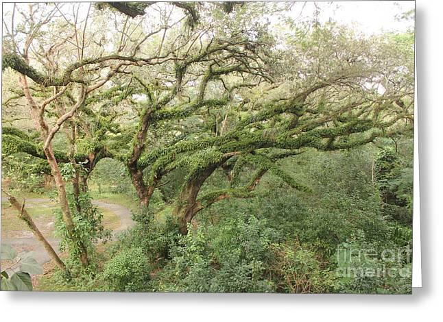 Mossy Oak Greeting Card by Joseph Williams