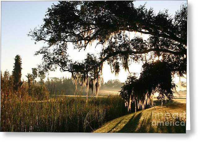 Mossy Oak Morning Greeting Card