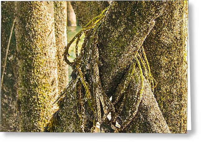 Mossy Pier Greeting Card by Ernest Puglisi