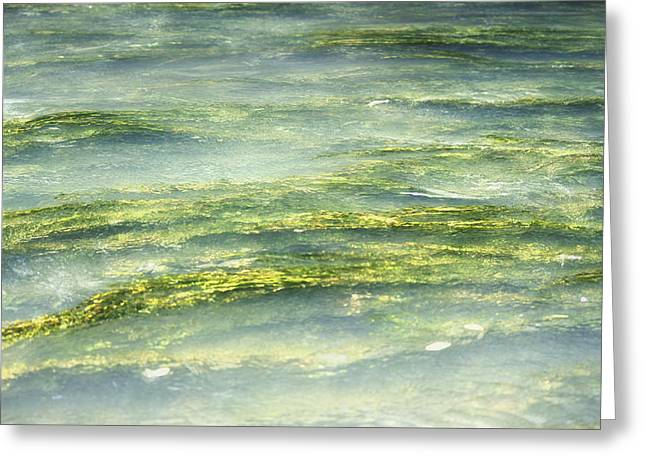 Mossy Tranquility Greeting Card by Melanie Lankford Photography