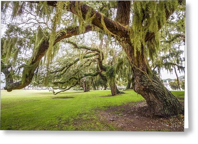 Mossy Trees At Jekyll Island Greeting Card by Debra and Dave Vanderlaan