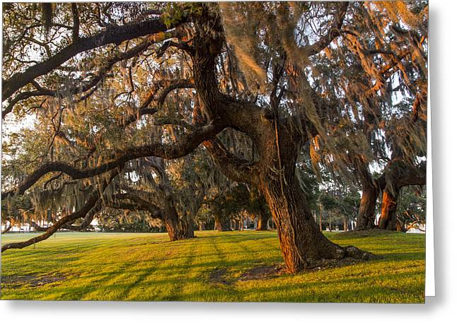 Mossy Trees At Sunset Greeting Card by Debra and Dave Vanderlaan