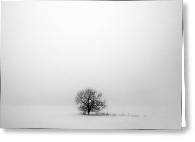 Mostly White Greeting Card by Todd Klassy