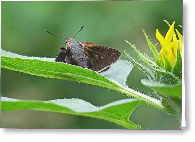 Moth Flower Greeting Card