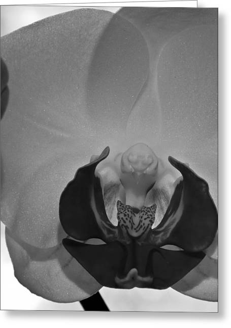 Greeting Card featuring the photograph Moth Orchid Bw by Ron White