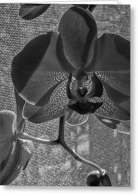 Greeting Card featuring the photograph Moth Orchid In Window by Ron White