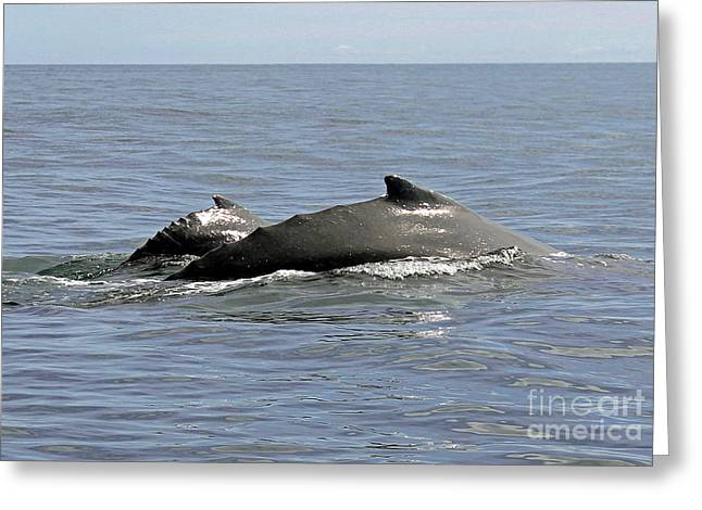 Mother And Baby Greeting Card by Bob Hislop