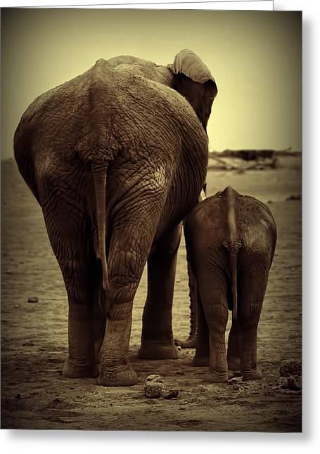 Mother And Baby Elephant In Black And White Greeting Card by Amanda Stadther
