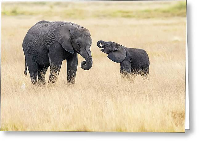 Mother And Baby Elephants Greeting Card