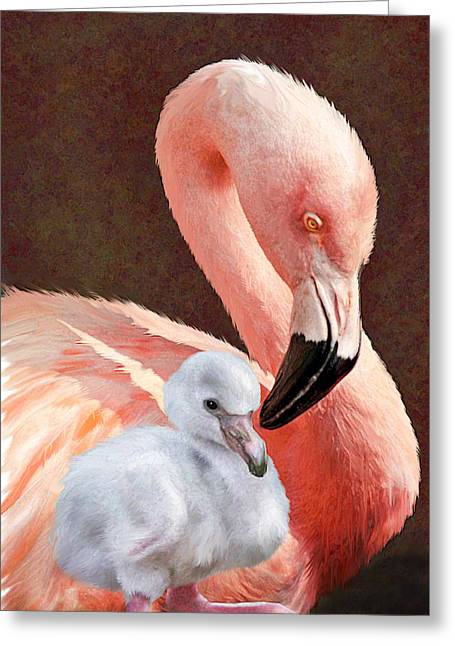 Mother And Baby Flamingo Greeting Card by Jane Schnetlage