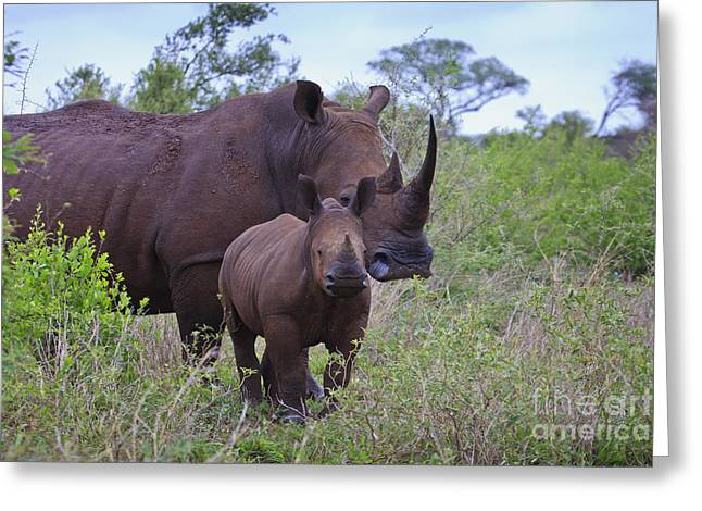 Mother And Baby Rhino Greeting Card