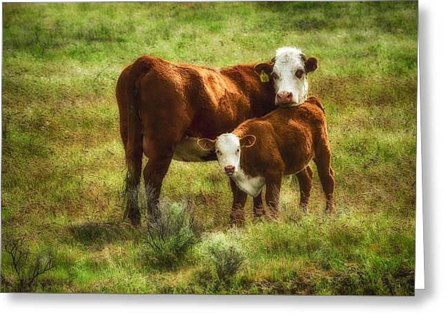Mother And Calf Greeting Card by John Trax