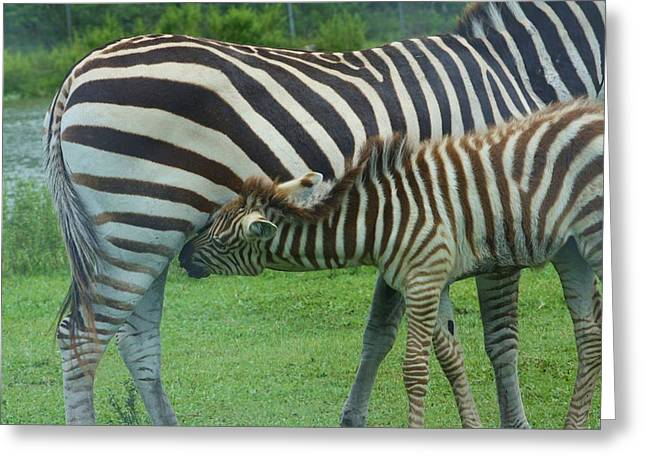 Mother And Child Greeting Card by Chuck  Hicks