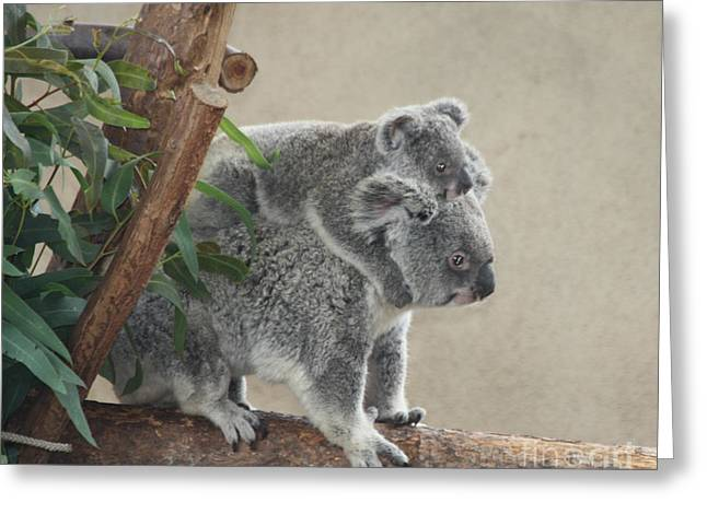 Greeting Card featuring the photograph Mother And Child Koalas by John Telfer