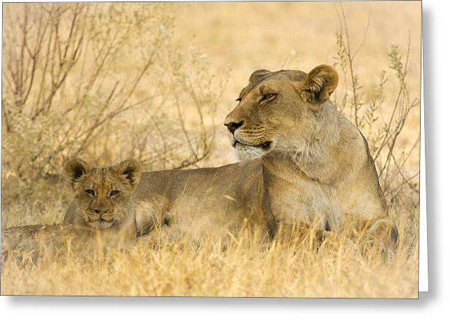 Mother And Cub Greeting Card by Alison Buttigieg