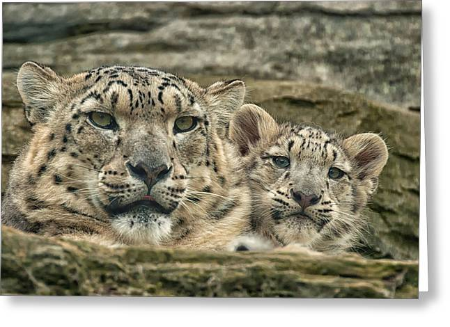 Mother And Cub Greeting Card by Chris Boulton