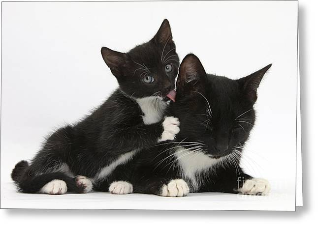 Mother Cat With Her Kitten Greeting Card by Mark Taylor