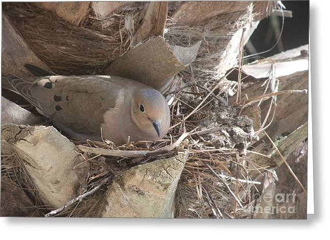 Mother Dove  Greeting Card