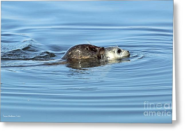 Mother Harbor Seal And Pup Greeting Card