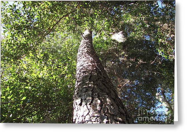 Mother Pine Greeting Card