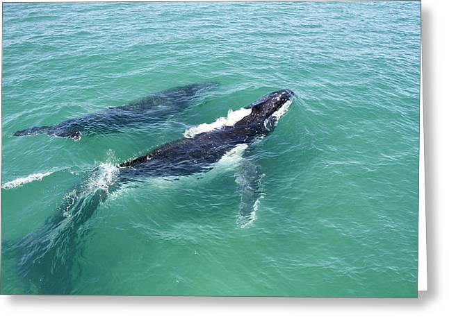 Mother Whale And Calf Greeting Card