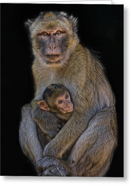 Motherly Love Greeting Card by Joachim G Pinkawa