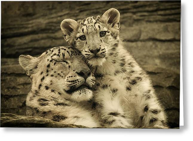 Mother's Love Greeting Card by Chris Boulton