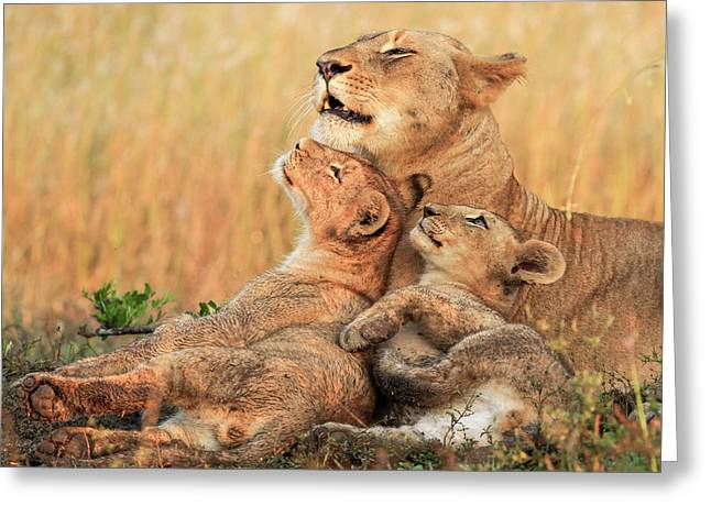 Mothers Love Greeting Card