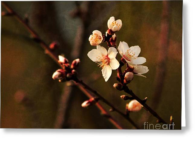 Greeting Card featuring the photograph Mother's Spring Blossoms by Marjorie Imbeau