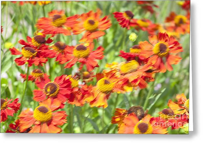 Motion Blur With Common Sneezeweed Greeting Card