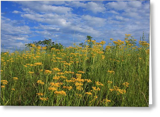 Mount Cheaha Goldenrod-alabama Greeting Card by Mountains to the Sea Photo
