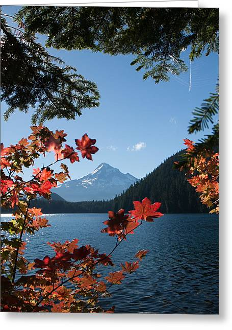 Mount Hood In Autumn Greeting Card