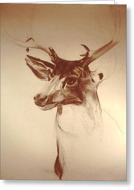 Deer Mount Greeting Card by Jeremy Johnson
