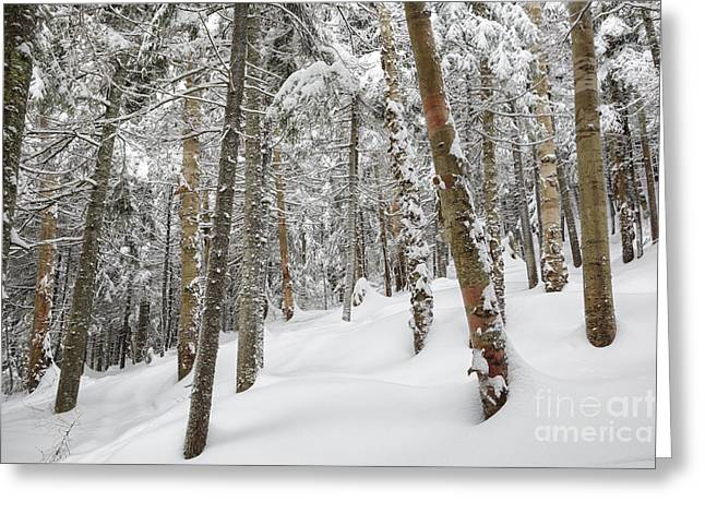 Mount Jim - Kinsman Notch New Hampshire Usa  Greeting Card by Erin Paul Donovan