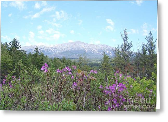 Mount Katahdin And Wild Flowers Greeting Card by Joseph Marquis