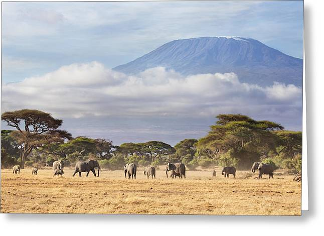 Mount Kilimanjaro Amboseli  Greeting Card by Richard Garvey-Williams