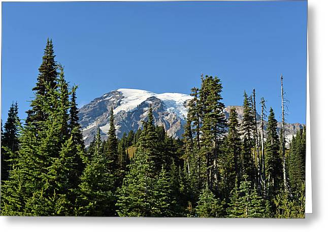 Mount Rainier Evergreens Greeting Card