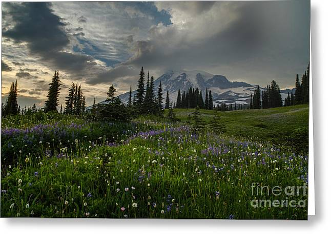 Mount Rainier Meadows Storm Brewing Greeting Card by Mike Reid