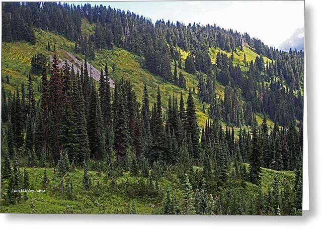 Greeting Card featuring the photograph Mount Rainier Ridges And Fir Trees.. by Tom Janca