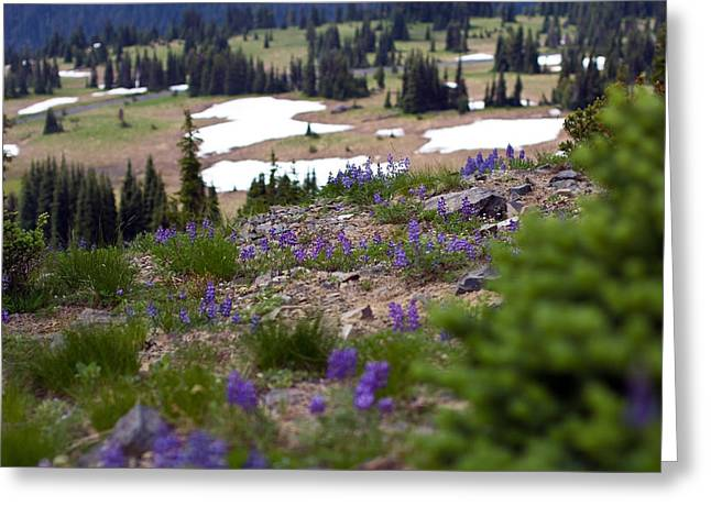 Greeting Card featuring the photograph Mount Rainier Wildflowers by Bob Noble Photography