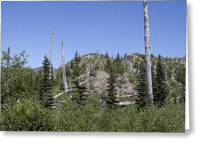 Mount Saint Helens National Volcanic Monument - 0028 Greeting Card by S and S Photo
